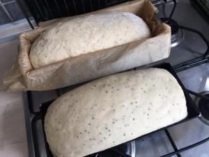 toastbrotkatharina1